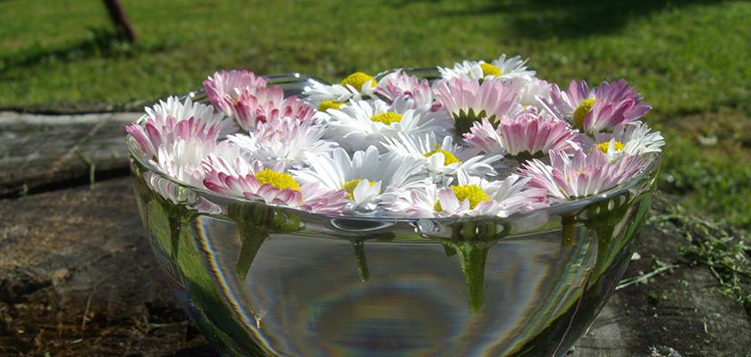Bach-virágterápia életmódtábor