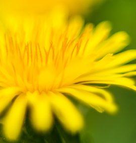 Európai virágeszenciák - deva