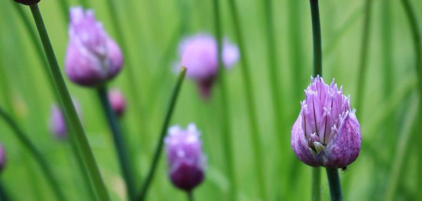 Bach virágterápia tanácsadó képzés