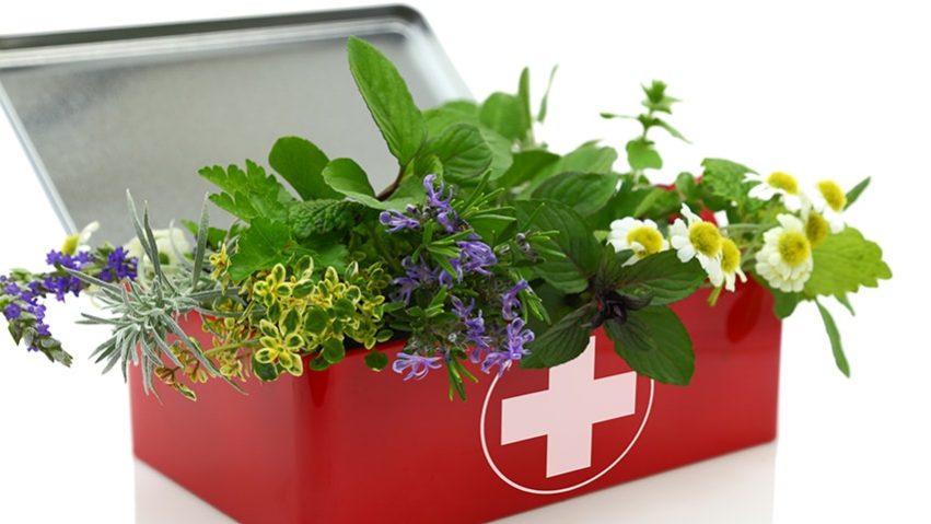 Fitoterápia és/vagy gyógynövényismeret
